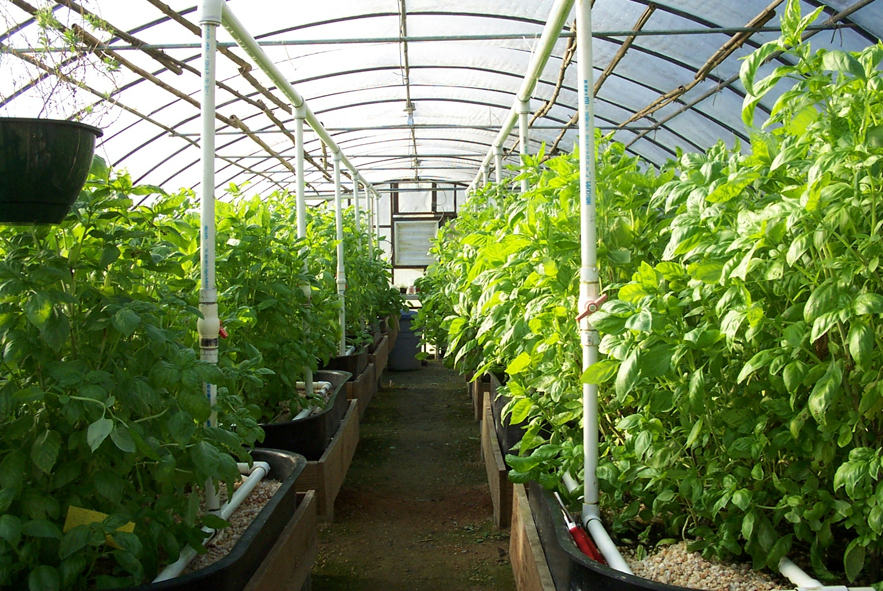 building buying a greenhouse