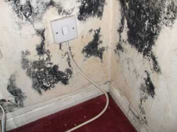 Black Mold Everything Simple